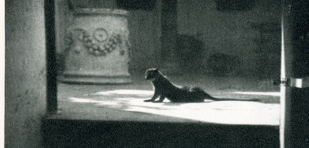 Axel Munthe's mongoose at Villa San Michele