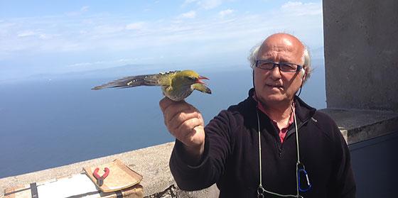 La stazione ornitologica di Capri